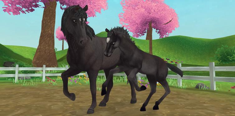 Dieses Pferd möchte dich unbedingt kennenlernen!