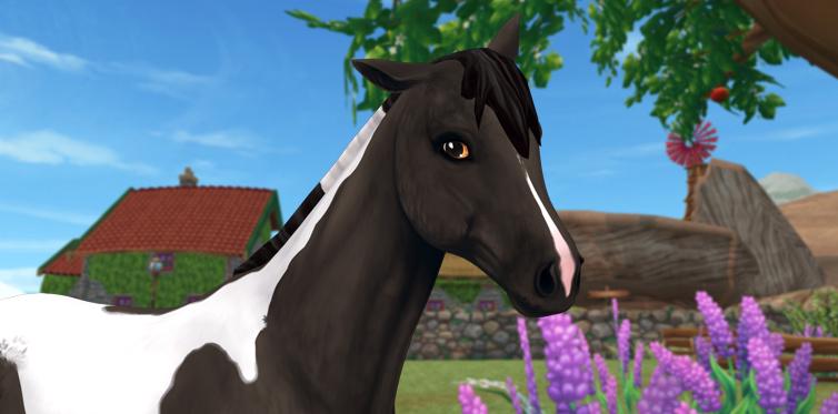 Een klein paard met een enorme persoonlijkheid!