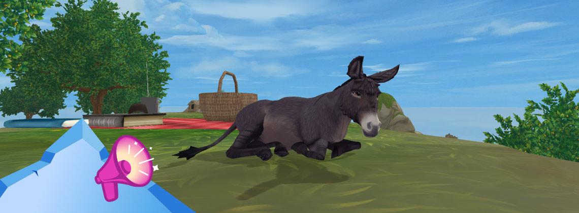Wie verloor de ezels uit het oog?